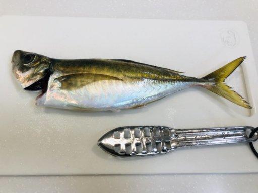 釣った魚を一夜干しにする方法♪手順を画像付きで解説♪