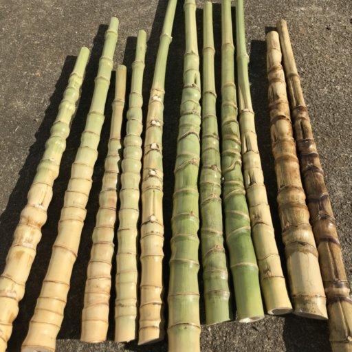 布袋竹とグラスソリッドで伊勢海老竿を作ろう♪【伐採~油抜き編】